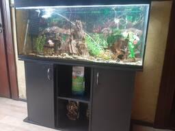 Аквариум на 200 литров со всеми аксессуарами и рыбками