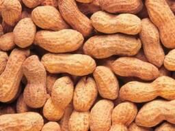 Арахис не чищеный, бобы, жаренный (хомячок)