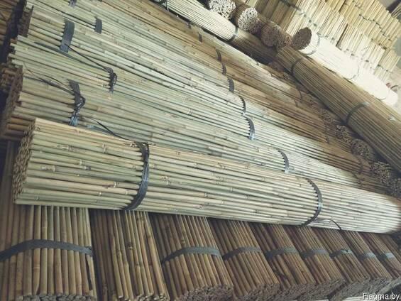 Бамбук. Бамбуковые колья
