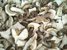Белый сушеный гриб боровик
