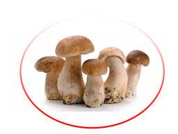 Белые грибы целые и резанные замороженные/ Porcini mushrooms whole frozen