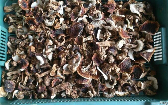 Белые сухие грибы