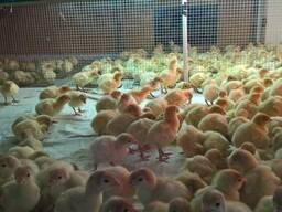 Брудер для цыплят на 5000 голов - фото 4