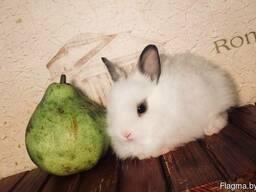 Декоративные кролики! питомник веселый хвостик.