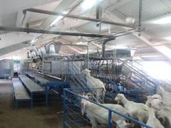 Доильные залы Milkline для коз и овец (Италия)