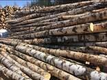 Дрова в бревнах лиственных пород (берёза, ольха) - фото 1