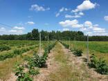 Фермерское хозяйство Брестская область - фото 2