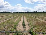 Фермерское хозяйство Брестская область - фото 6