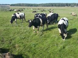 Фермерское хозяйство в Минской области