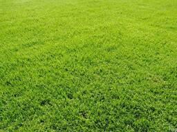 Газонная трава Орнаментал-профи