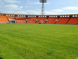 Газонная трава Спорт Либеро