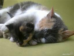 Гостиница (передержка) для кошек