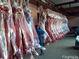 Говядина охлажденная бык (1 кат) , корова (1-2 категория)