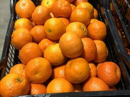 Greek mandarin