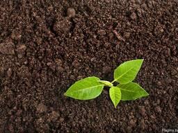 Грунт, земля, плодородный грунт, чернозем, торф