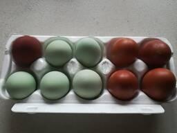 Инкубационное яйцо марана и другие породы.