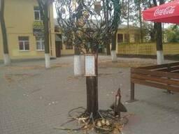 """Инсталляция """"Дерево желаний"""""""
