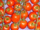 Испанские овощи. Прямые поставки. - фото 5