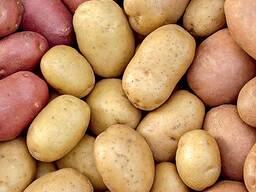 Картофель калибр 5