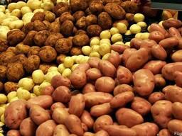 Картофель с документами оптом от 65 копеек/кг