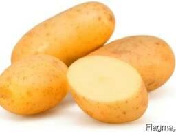 Картофель мытый