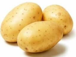 Картофель отптом
