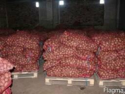 Картофель семенной оптом напрямую от производителя