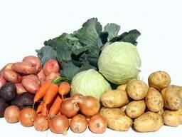 Картофель, свекла, морковь, капуста