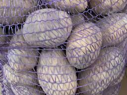 Продажа. Картофель свежий, РБ. Сорта Бриз, Гала, Манифест, Скарб и т. д.
