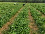 Фермерское хозяйство Брестская область - фото 3