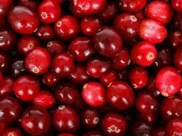 Клюква крупноплодная (organic cranberry)