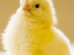 Комбикорм ПК-5-1 для цыплят от 0 до 2-х недель