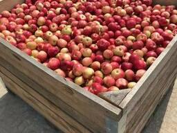 Контейнер деревянный для хранения яблок 1200*1000*800