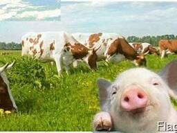 Кормовая добавка для коров, свиней, овец и птиц