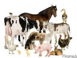 Кормовые добавки для птиц, свиней, коров, овец, Лошадей, кролико