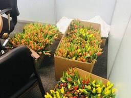 Коробки из гофрокартона для тюльпанов