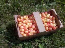 Корзинка для ягод из гофрокартона 285х150х110