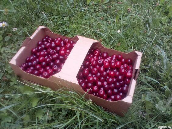 Корзинка для ягод из гофрокартона 375х187х125