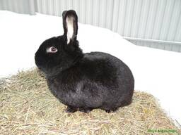 Кролики 2-ух месячные