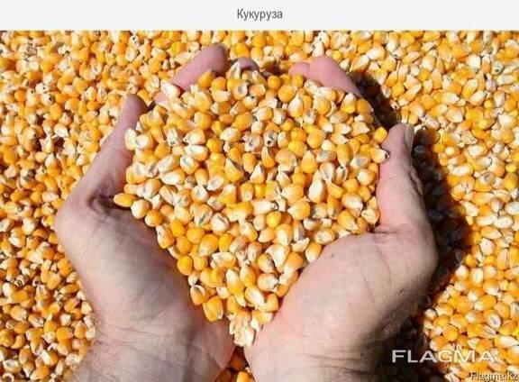 Кукуруза Фуражная в мешках по 30 кг