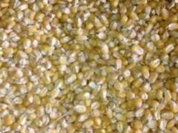 Кукуруза производитель (Россия) наличие 10тыс тонн