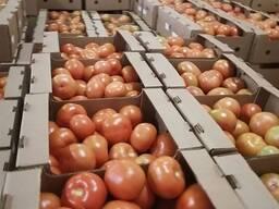 Купим томат Беларусь на Россию от фуры