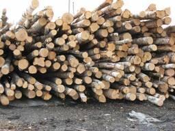 КУПЛЮ березу на дрова
