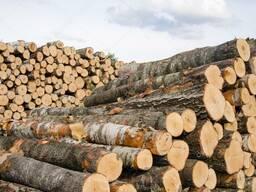 Куплю лес - бревно береза , осина , ольха , ель , сосна от 1 м до 6 м