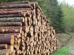 Куплю круглый лес от 14. Длинна 3,4,5,6.