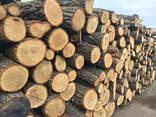 Куплю кругляк на дрова дуб, граб, ясень. - фото 1