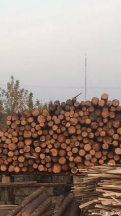 Куплю лес х/в пород сырец 14-20 , L от 1.2 м-6 м с доставкой