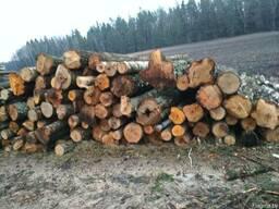 Куплю лес кругляк хвойных и лиственных пород,возможен самовы