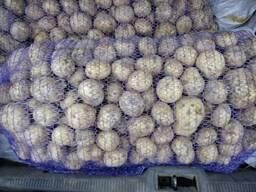 Куплю мелкий картофель 2 пр-ва РБ
