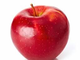 Куплю яблоки и картофель производства РБ